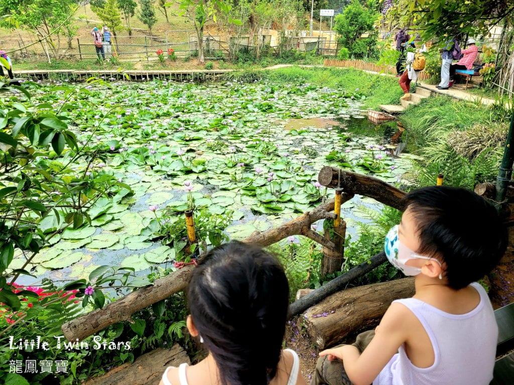 [親子好去處] 世外蓮花園 ~看蝌蚪+紅蜻蜓+牛牛